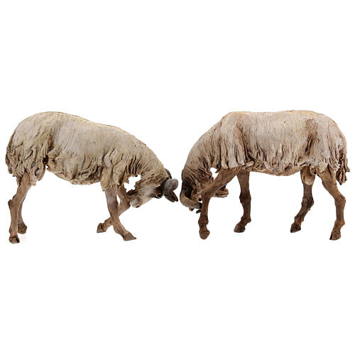 Scena caproni in lotta presepe 30 cm Tripi 7