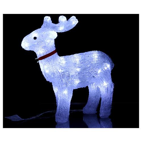 Renna luminosa 40 led bianco freddo uso interno 2