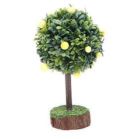Mousse végétale, Lichens, Arbres, Pavages: Citronnier bois et résine
