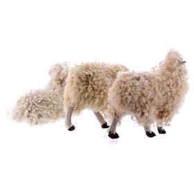 Kit 3 pecore con lana 18 cm presepe napoletano s5