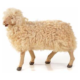 Kit 3 pecore con lana per presepe napoletano con pastori di 22 cm s2