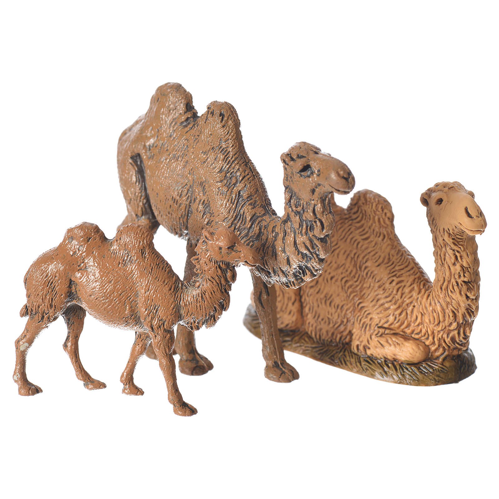 Camels, 3.5-6cm Moranduzzo collection 4