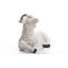 Sheep nativity figurine in resin 30/40cm s2
