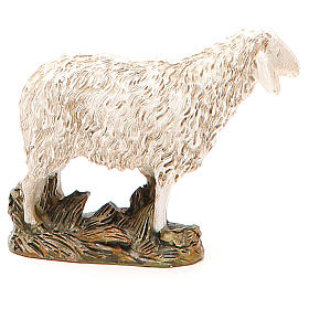 Sheep looking up in painted resin, 12cm Martino Landi Nativity s2