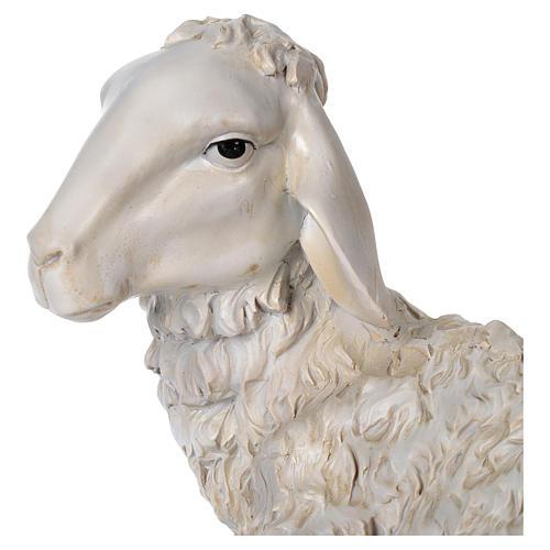 Ovelha sentada 28x14 cm resina para presépio com figuras de altura média 50-60 cm 2