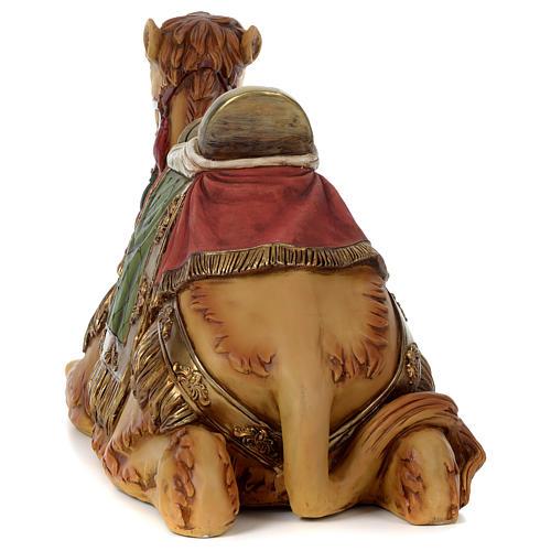 Camello belén 60 cm 7