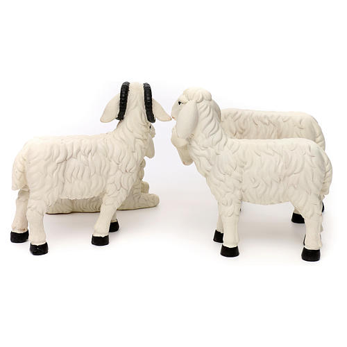 3 Pecore con ariete resina colorata per presepe 35-40 cm 6