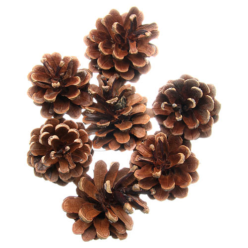 Pine cones, pack of 75grams 1