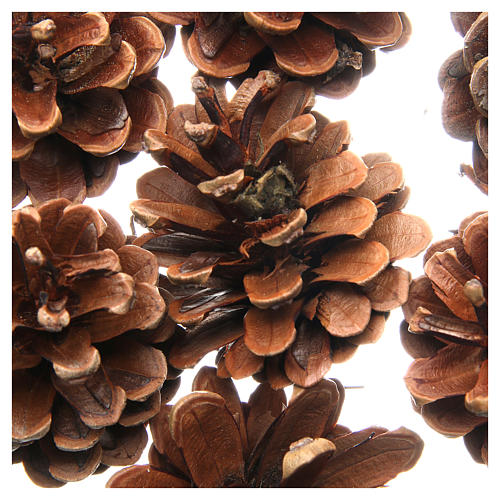 Pine cones, pack of 75grams 2