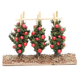 Musgo, líquenes, plantas.: Tomatera belén