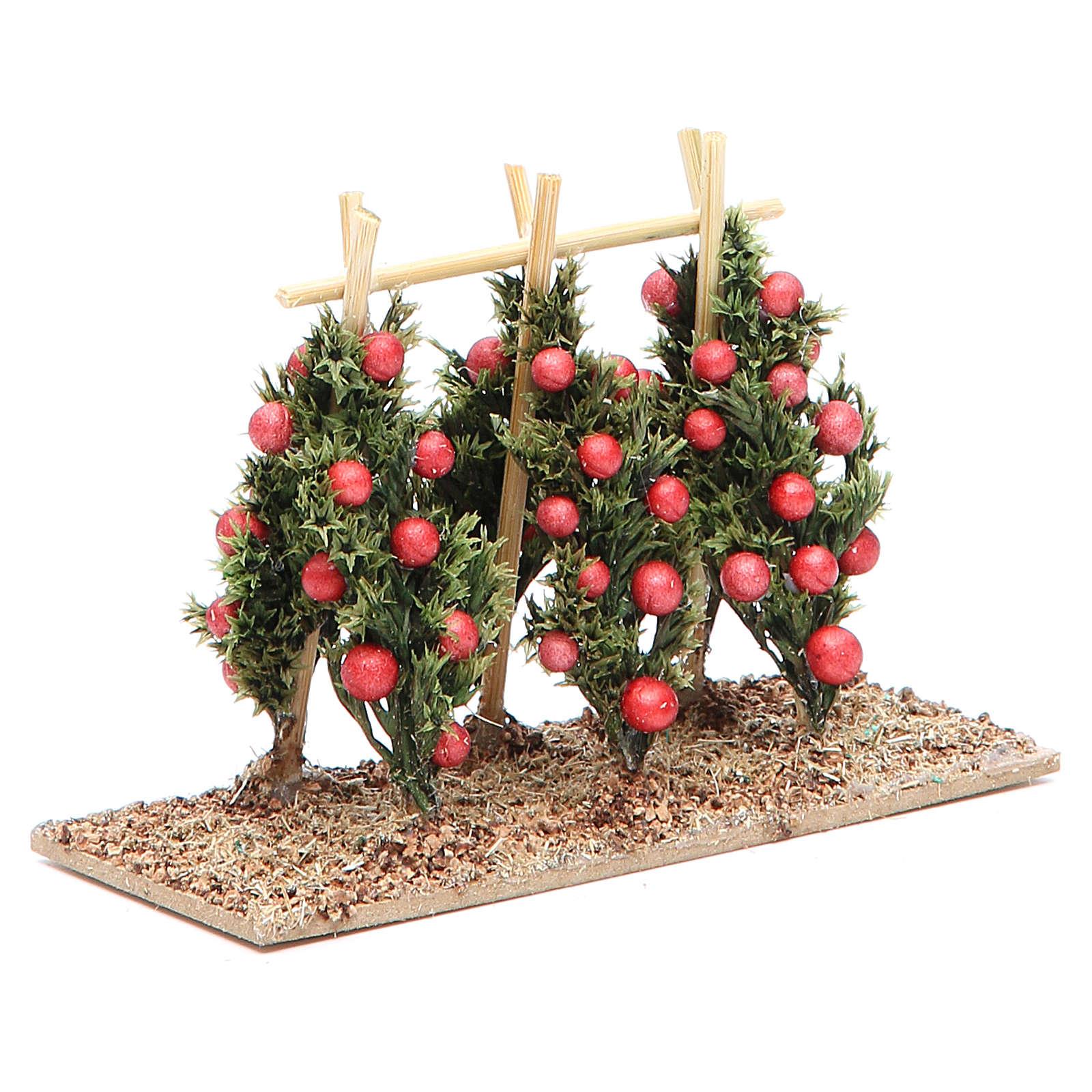 Pianta di pomodori presepe 4