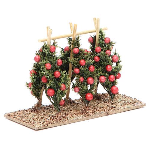 Pianta di pomodori presepe 2