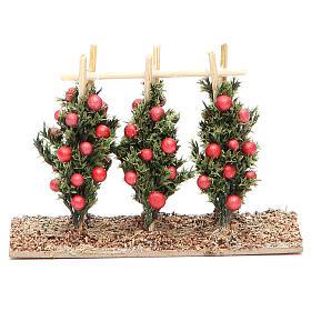Mech, porosty, krzewy, podłoża: Krzewy z pomidorami do szopki