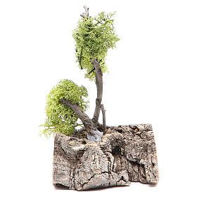 Musgo, líquenes, plantas.: Árbol con liquen sobre roca 13x8x8