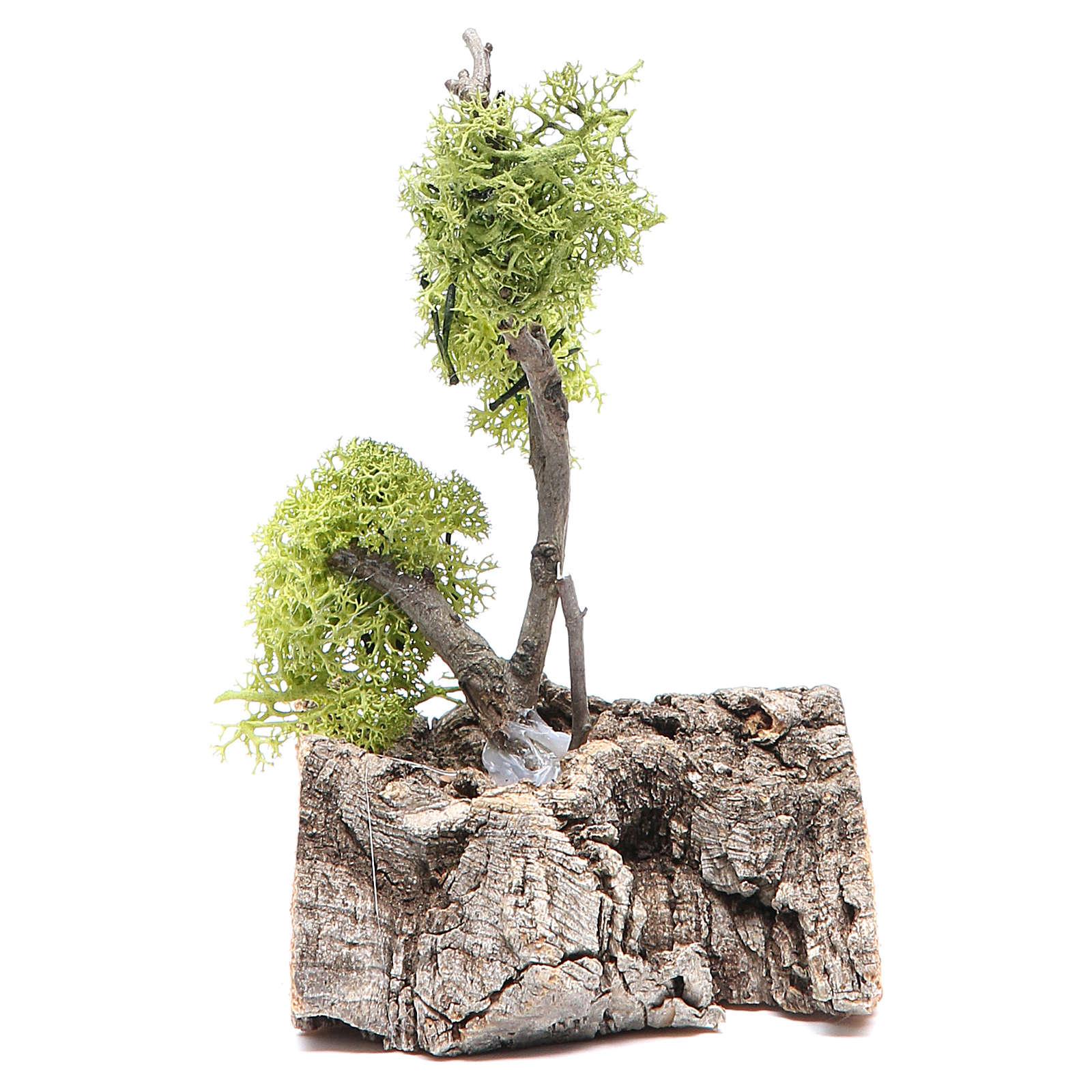Albero con lichene su roccia 13x8x8 4