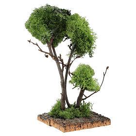 Árvore com líquen na rocha 13x8x8 cm s3