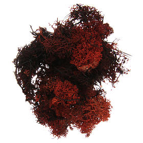 Musgo, líquenes, plantas.: Musgo liquen marrón para belén 100 gr