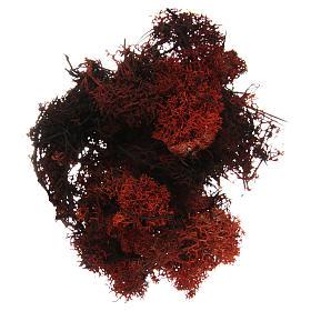 Muschio lichene marrone per presepe 100 gr s1