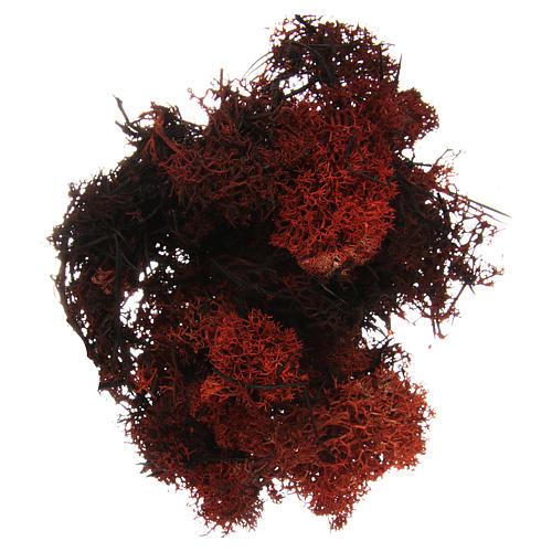 Muschio lichene marrone per presepe 100 gr 1