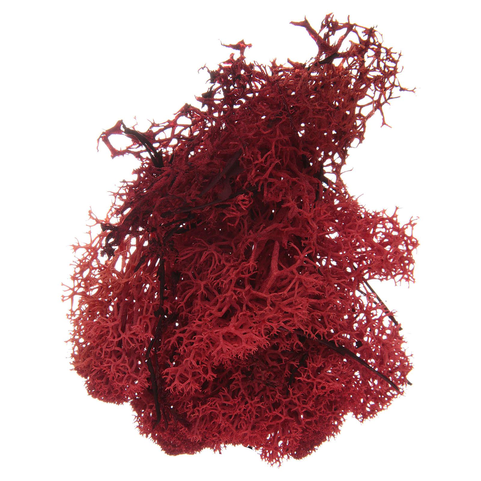 Muschio lichene rosso per presepe 100 gr 4