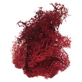 Muschio lichene rosso per presepe 100 gr s2