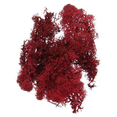 Muschio lichene rosso per presepe 100 gr 1