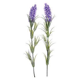 Musgo, líquenes, plantas.: Flores de lavanda para belén
