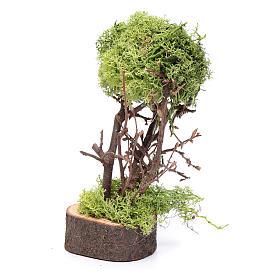Arbre de lichen pour crèche h 15 cm s2