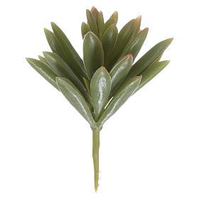 Musgo, líquenes, plantas.: Agave para belén hecho con bricolaje