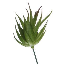 Aloe pour bricolage crèche s2
