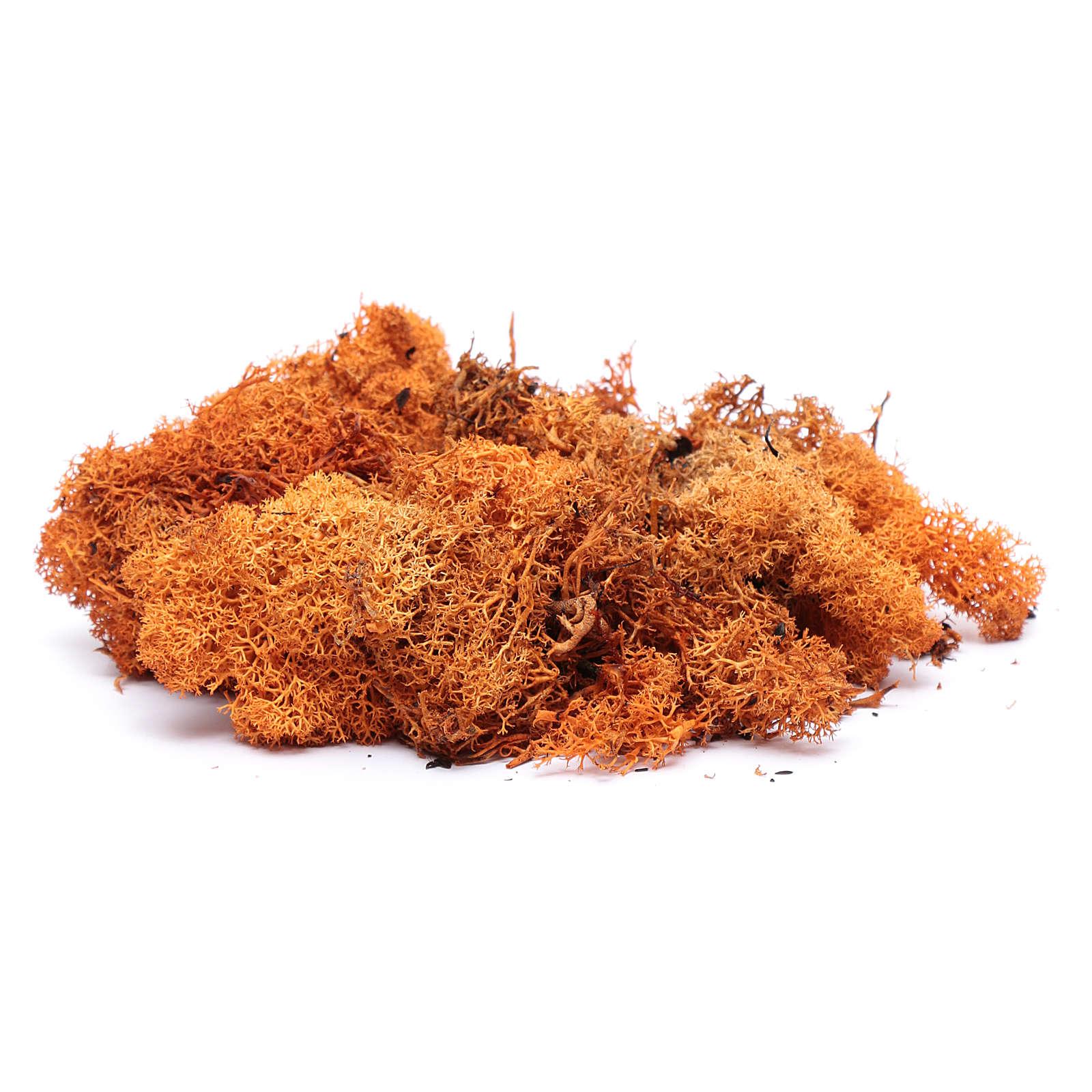 Orange lichen for Nativity Scene 100 grams 4
