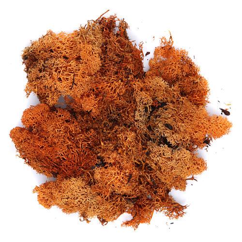 Orange lichen for Nativity Scene 100 grams 1