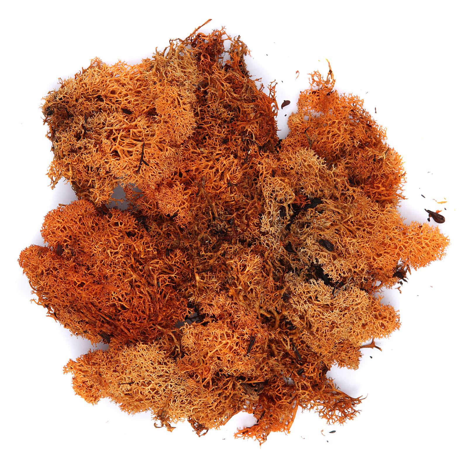 Lichene presepe color arancione 100 gr 4