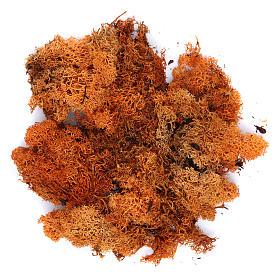 Muschio, licheni, piante, pavimentazioni: Lichene presepe color arancione 100 gr