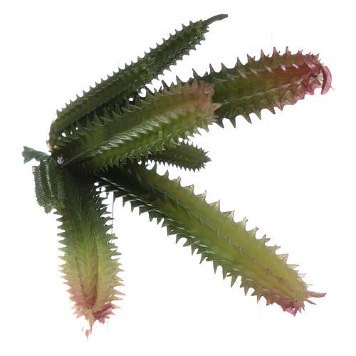 Cactus 7 steli per presepe 3