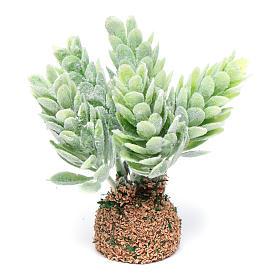 Moss, Trees, Palm trees, Floorings: Nativity scene cactus 7 cm