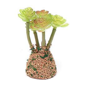 Cactus presepe assortito h reale 7 cm s4