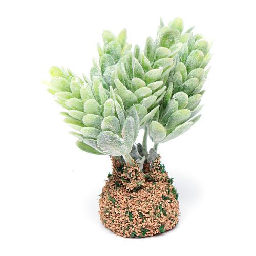 Cactus presepe assortito h reale 7 cm 2