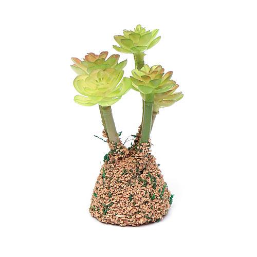 Cactus presepe assortito h reale 7 cm 3