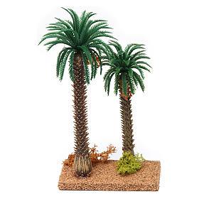 Musgo, líquenes, plantas.: Palma doble 20x10x5 cm