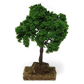 Musgo, líquenes, plantas.: Roble 15x10x10 cm