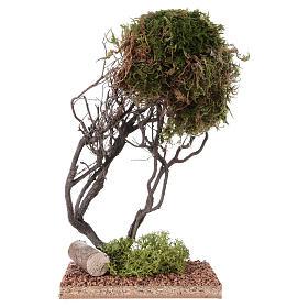 Mousse végétale, Lichens, Arbres, Pavages: Arbre avec mousse pour crèche 20x10x10 cm