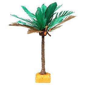 Palma bicolore h reale 22 cm s1