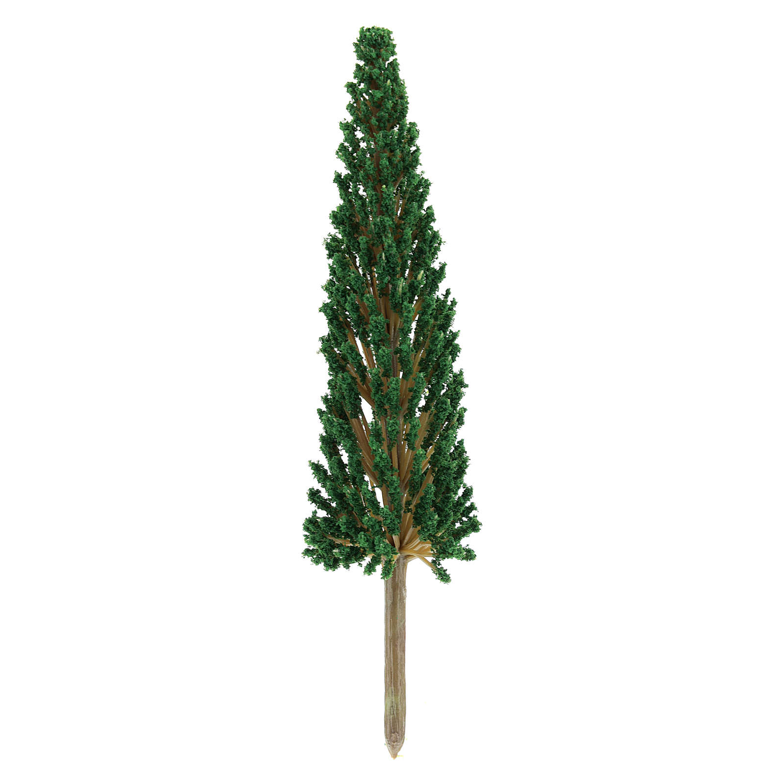 Cypress tree, real h 17 cm without base 4