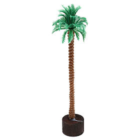 Grafted palm tree 14 cm nativity s1