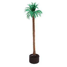 Grafted palm tree 14 cm nativity s2