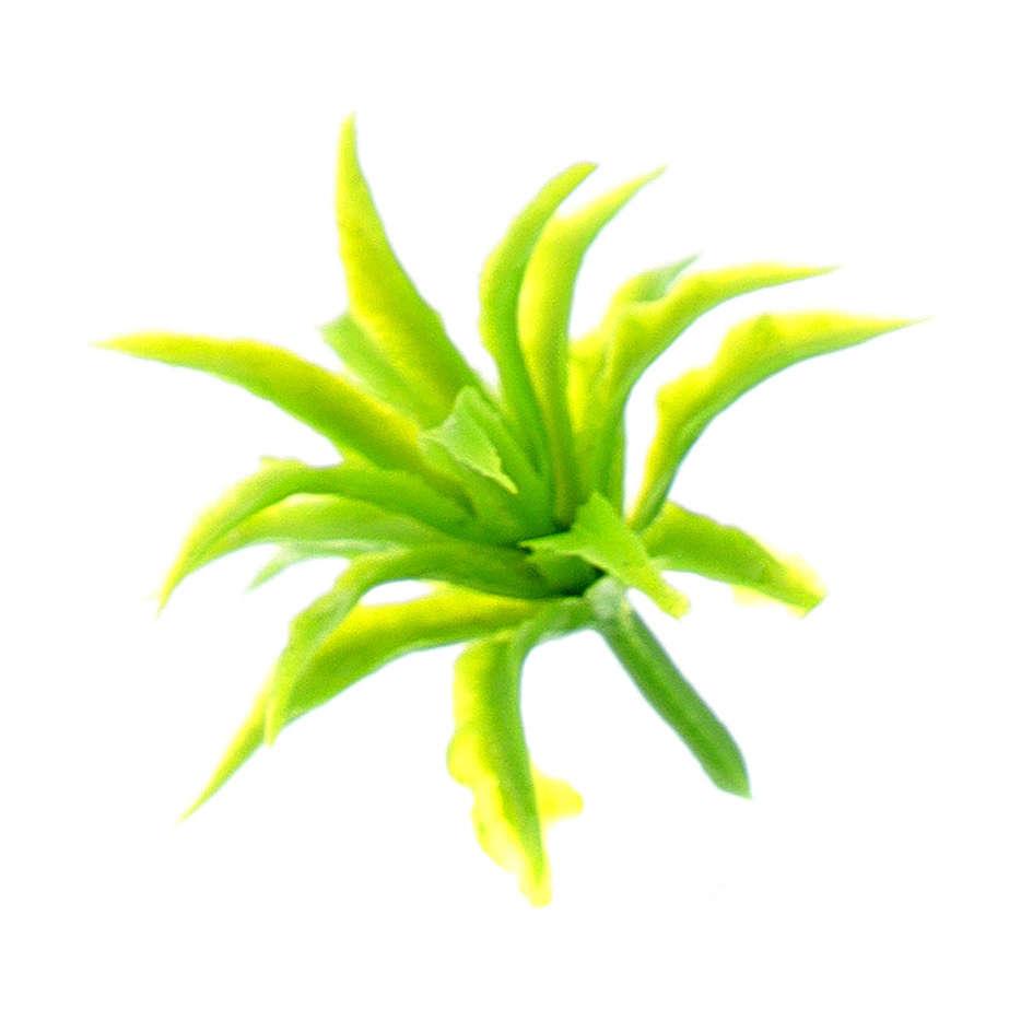 Agave presepe 6-10 cm Moranduzzo plastica 4