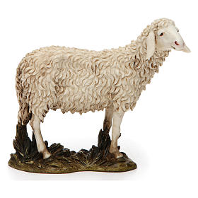 Presepe Moranduzzo: Pecora a testa alta resina per presepe 20 cm Moranduzzo