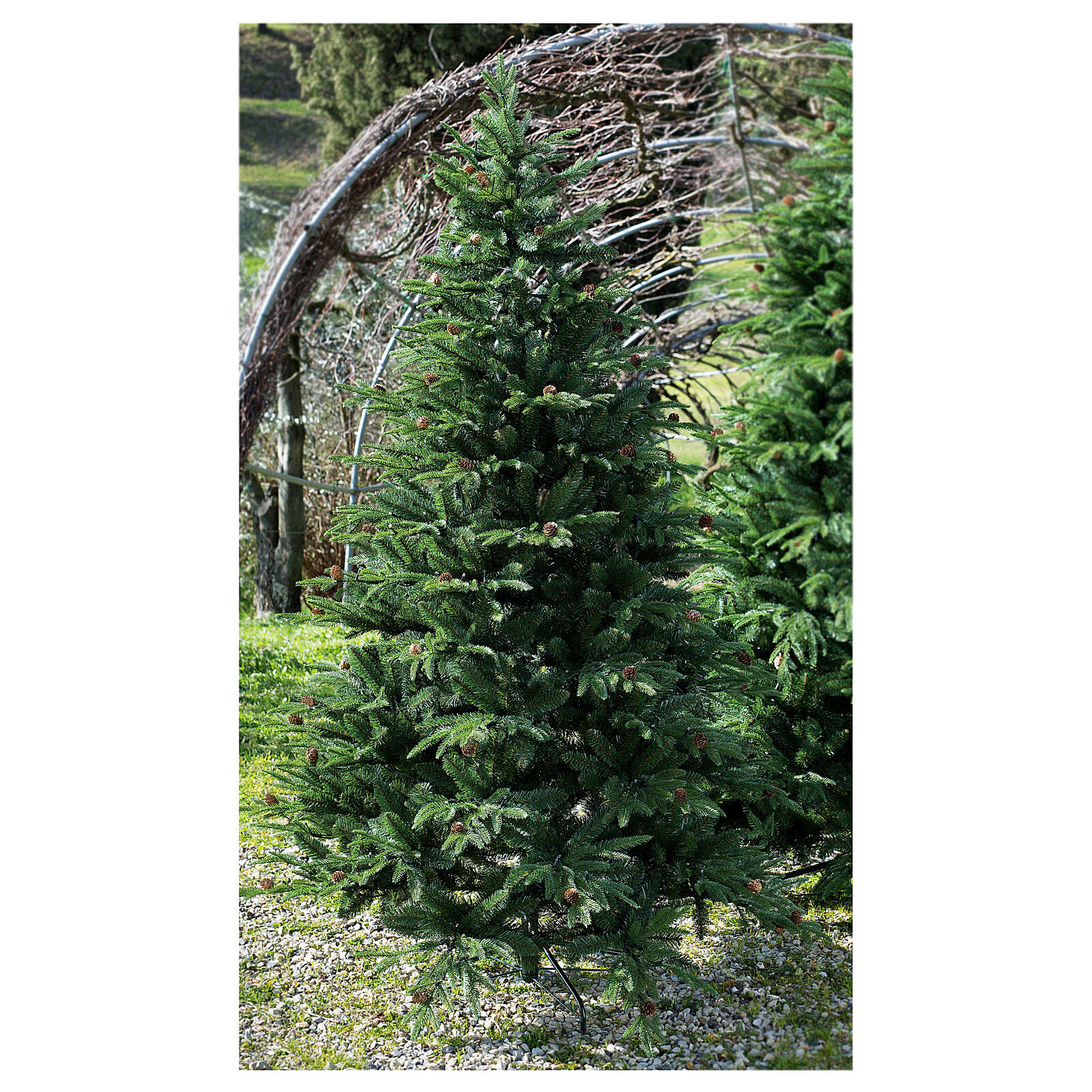 STOCK Austrian Fir Christmas tree 240 cm with pinecones for outdoor 3
