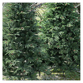 STOCK Austrian Fir Christmas tree 240 cm with pinecones for outdoor s2